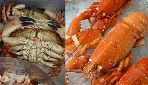 Crab and lobster shellfish