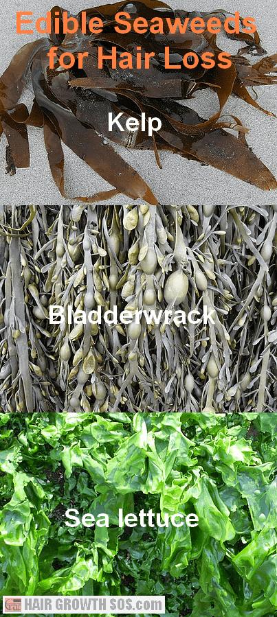 Edible seaweeds for hair loss