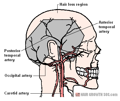Main arterial network of the scalp.