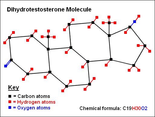 Dihydrotestosterone molecule